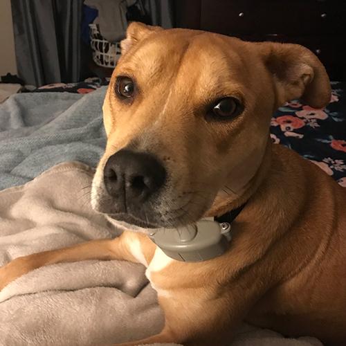 dog-photo4 - SpryDog Massage